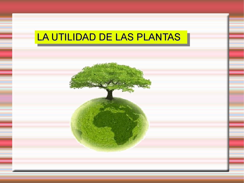 La utilidad de las plantas by javier martin for Utilidad de las plantas ornamentales