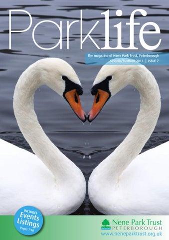 """Предпросмотр схемы вышивки  """"Любовь двух лебедей """" ."""