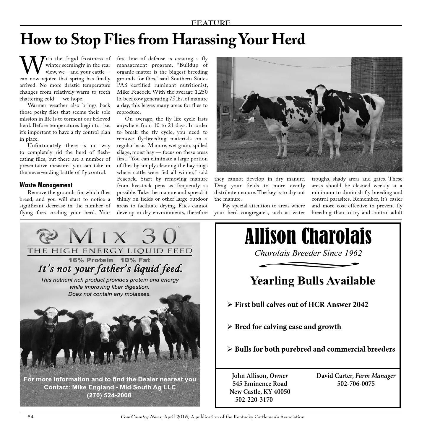 the kentucky cattlemans association essay