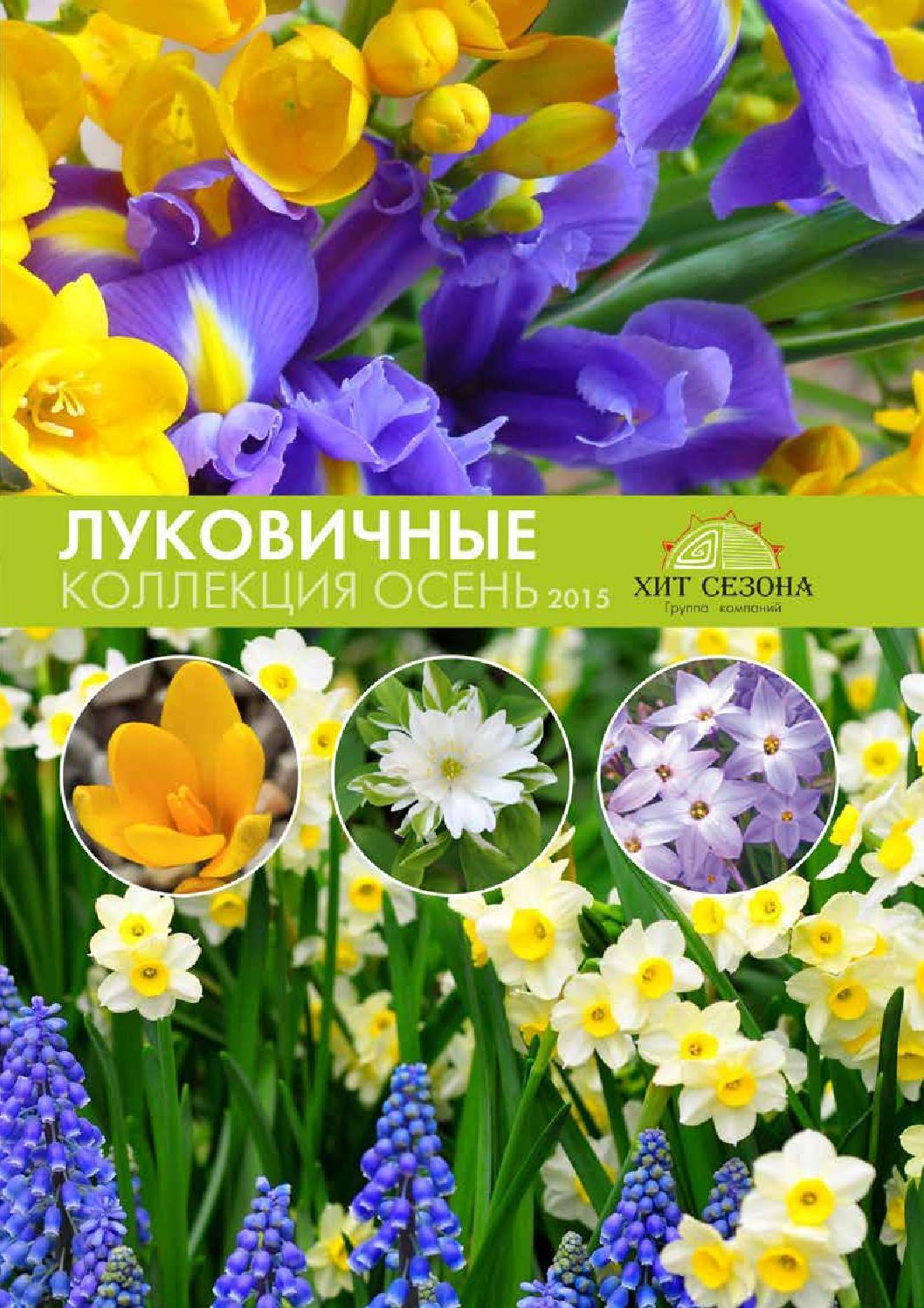 Каталог садовых луковичных цветов с