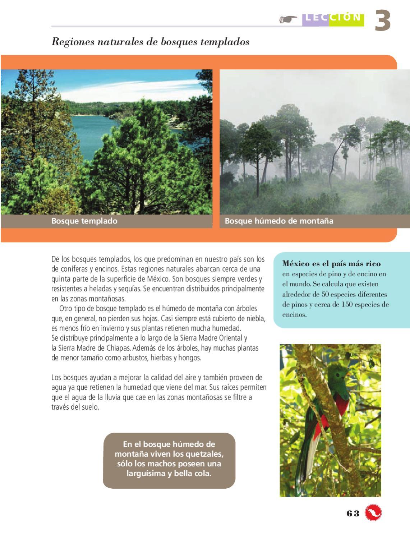 Geografia 4to grado bloques 1 y 2 by rar muri page 65 for Como se llaman los arboles que no pierden sus hojas