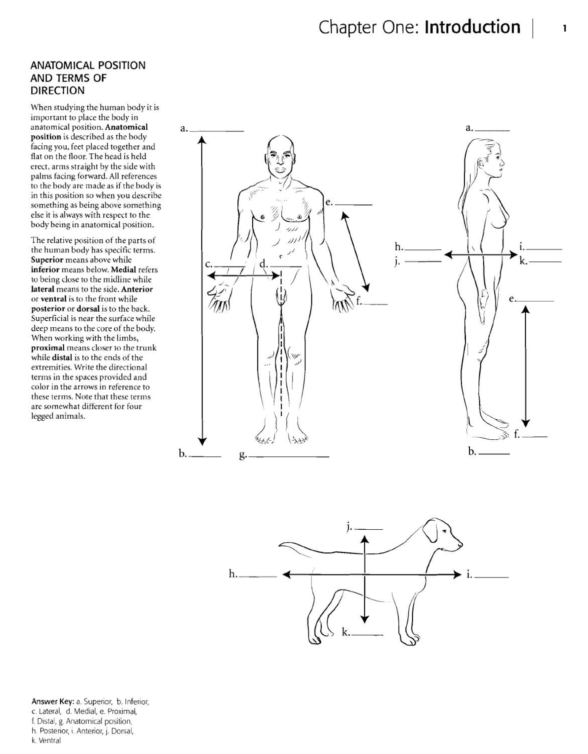 worksheet Anatomical Position Worksheet kaplan anatomy coloring book by cristhell cano page 1 issuu