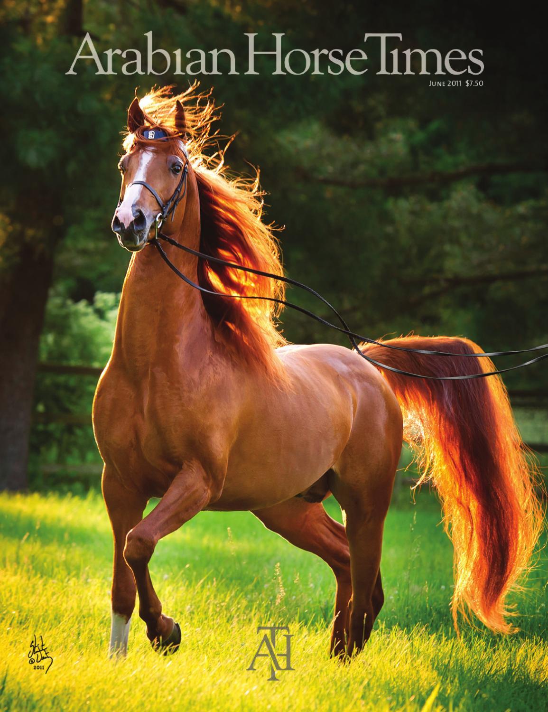 Arabian horse times june 2011 by arabian horse times issuu - Arabian horse pics ...