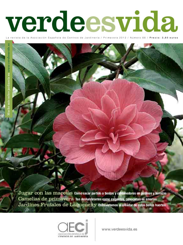 Verdeesvida by hedbe centro de jardineria issuu - Como cuidar una hortensia de exterior ...