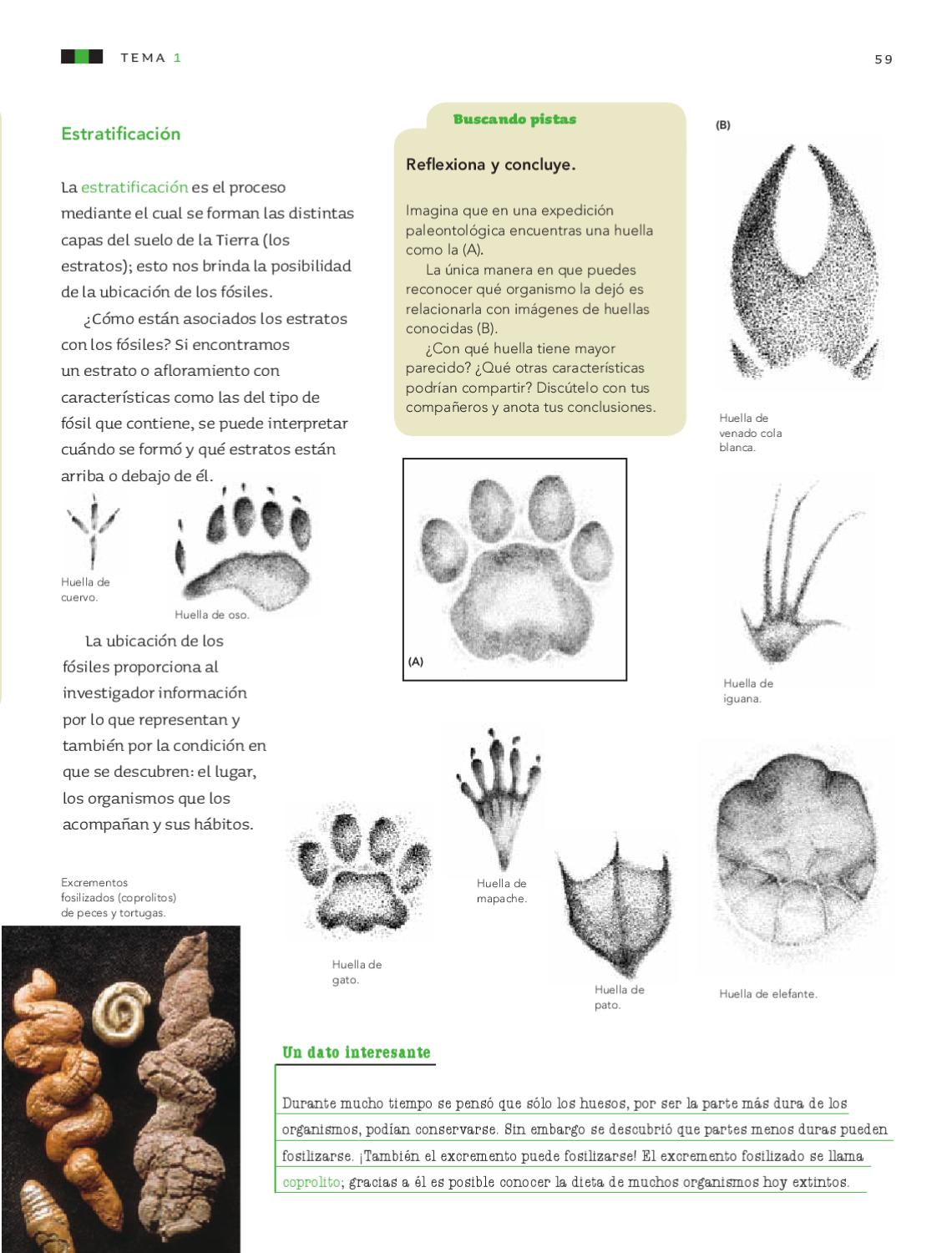 Ciencias naturales 6to grado by rar muri page 61 issuu for Capas que forman el suelo