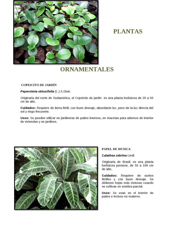 Catalogo plantas ornamentales by arboris ambiente y for 20 plantas ornamentales