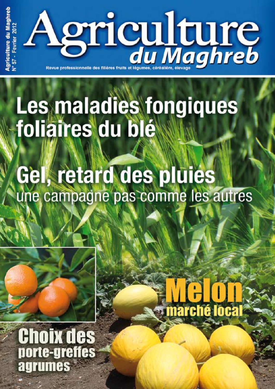 les pages maghreb algerie pdf