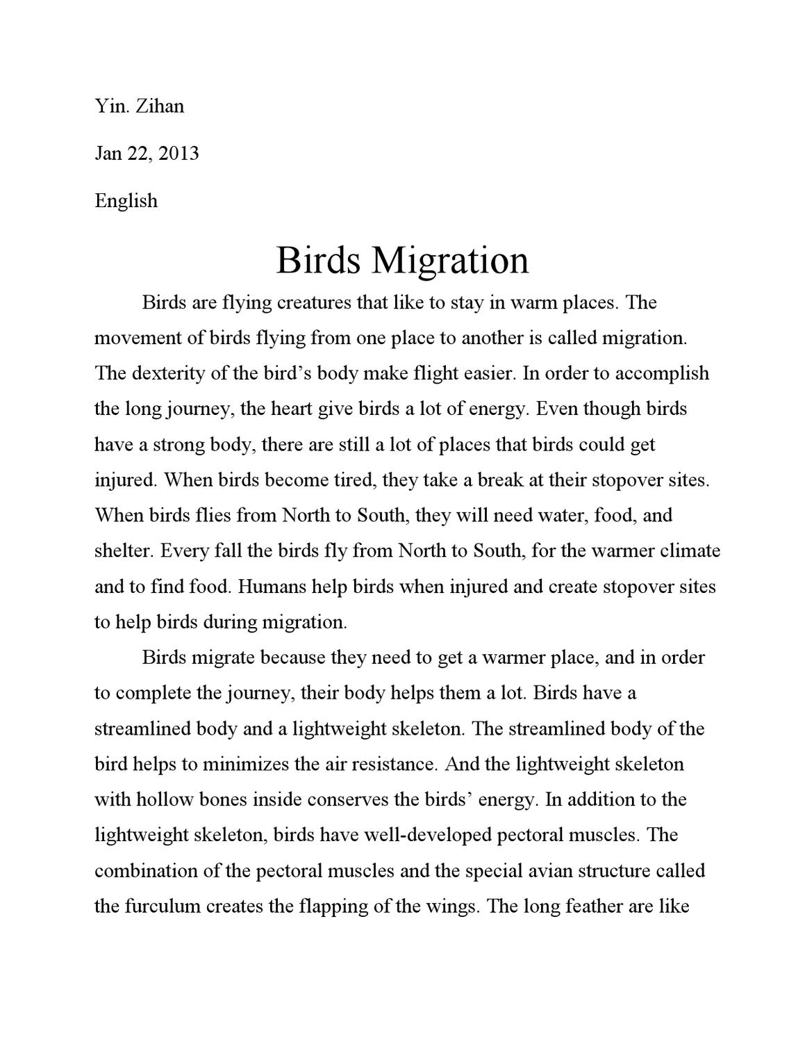 birds migration essay by bill yin issuu