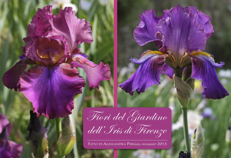 Fiori del giardino dell 39 iris di firenze by il valico - Giardino dell iris firenze ...