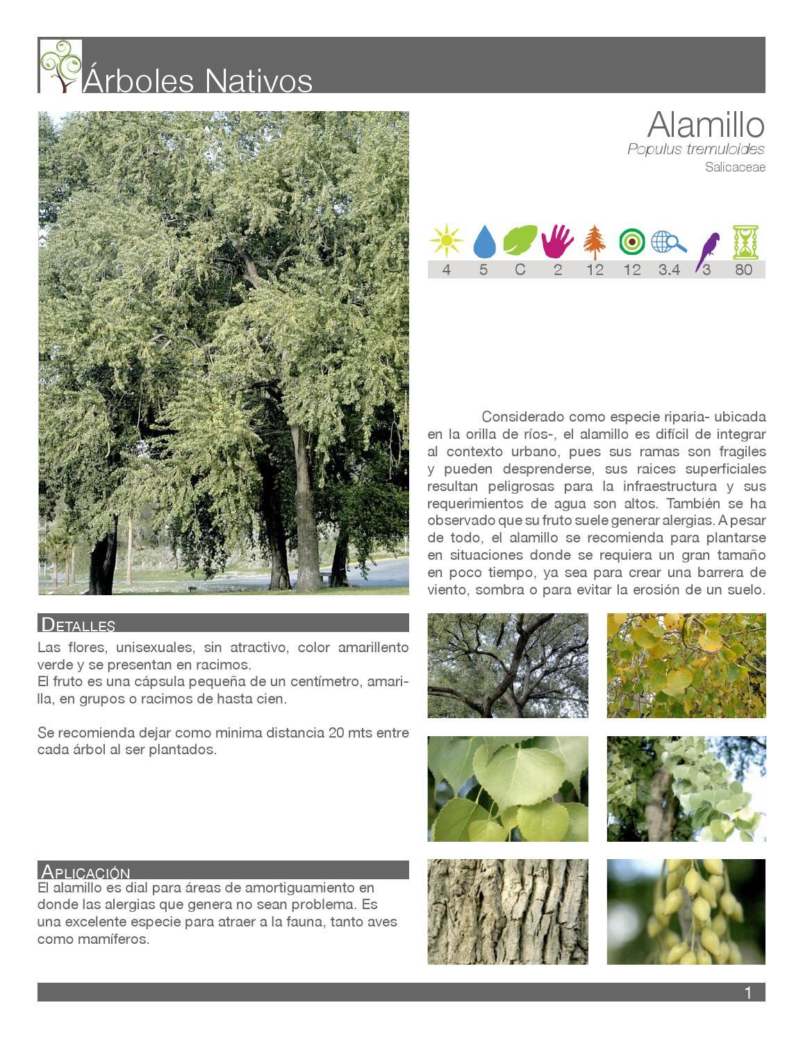catalogo arboles nativos nuevo leon mex by bernadette