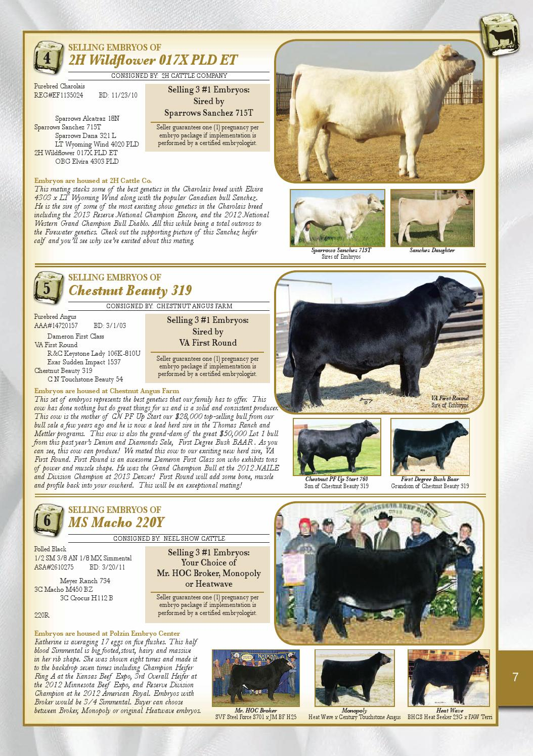 Mn Beef Expo Home Download Pdf