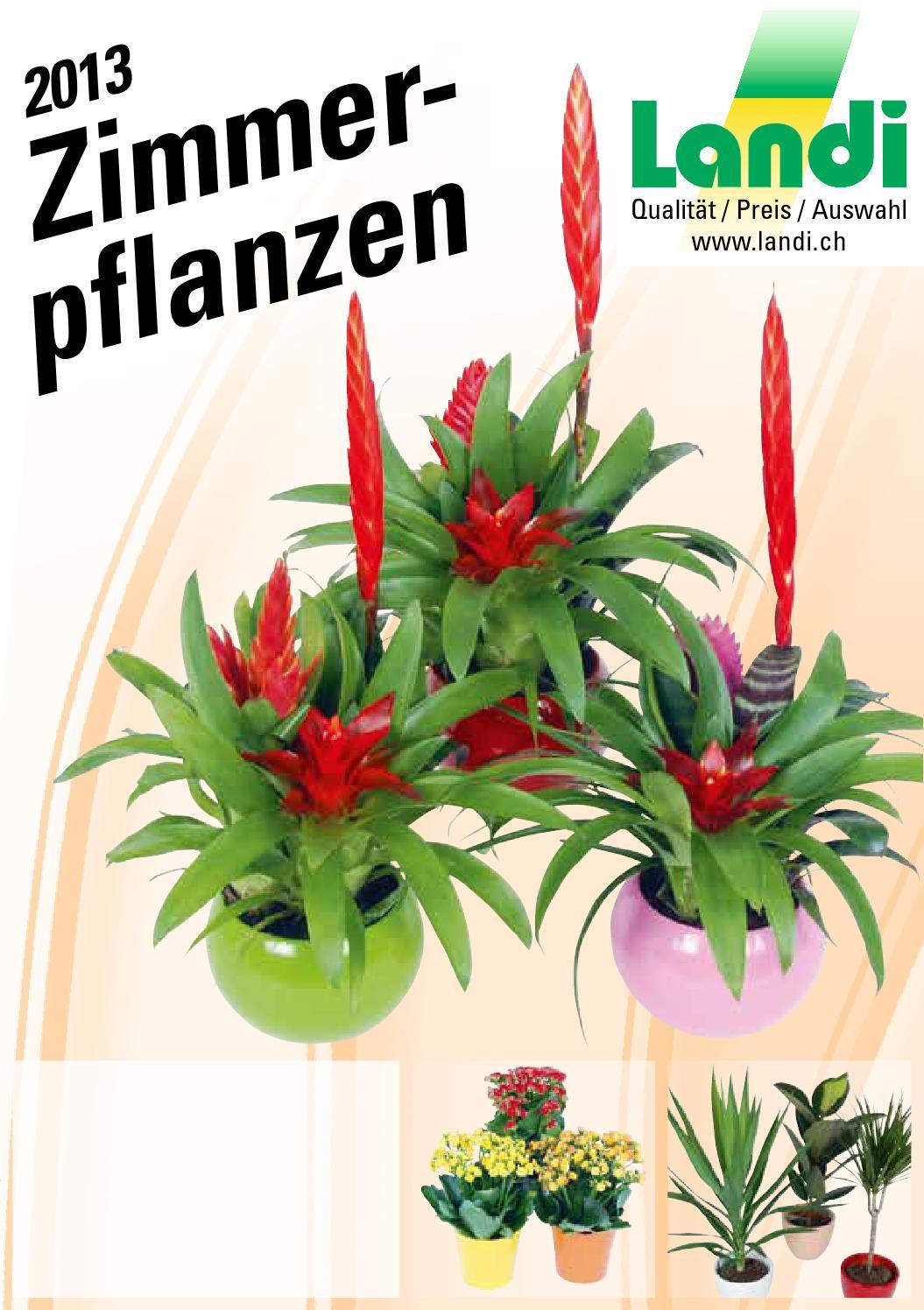 zimmerpflanzen 2013 by fenaco genossenschaft issuu. Black Bedroom Furniture Sets. Home Design Ideas