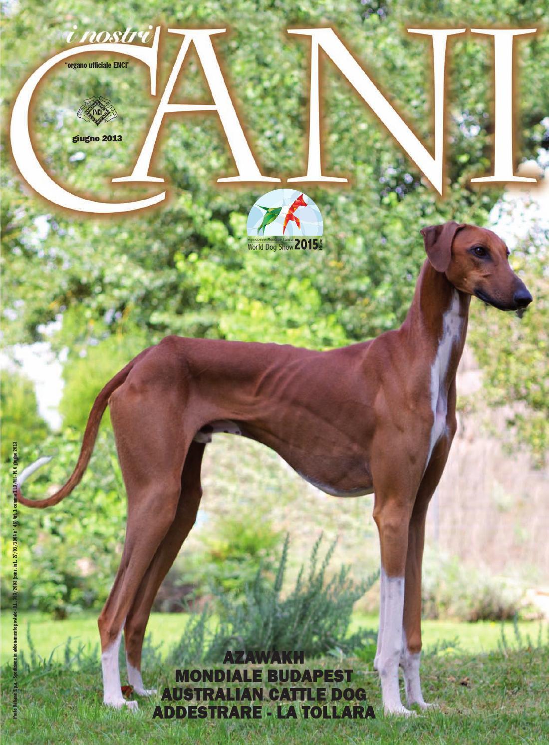 Enci I Nostri Cani Giugno 2013 By Enci Ente Nazionale