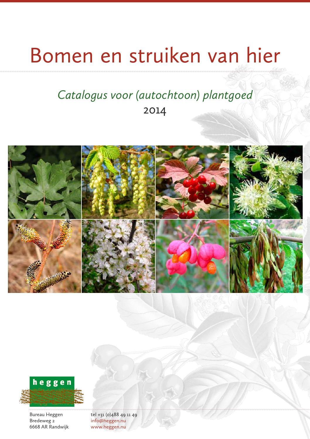 Plantwijzer limburg by regionaal landschap lage kempen   issuu