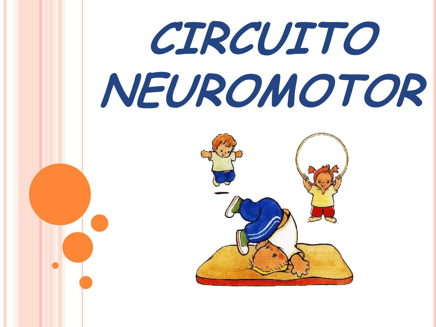 Circuito Neuromotor : Circuito neuromotor power point by gabriela rodriguez issuu