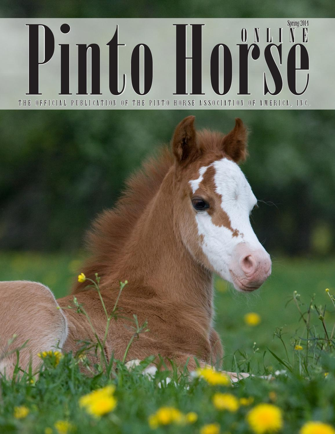 Pinto Horse Magazine - Spring 2014 by Pinto Horse Association of America, Inc. - issuu