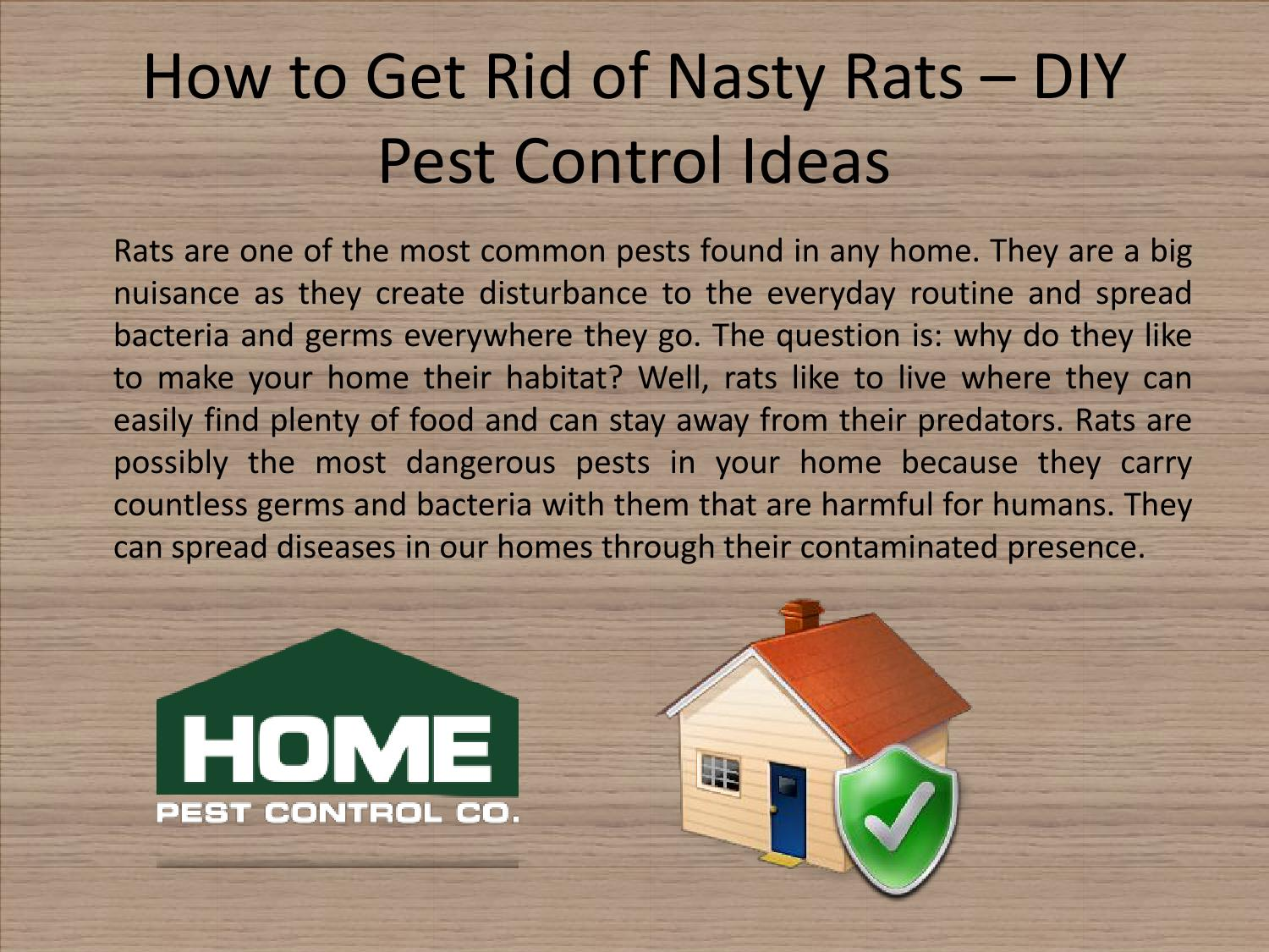 How To Get Rid Of Nasty Rats By Home Pest Control Issuu