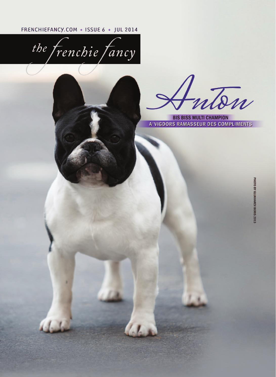 Dog fancy magazine french bulldog