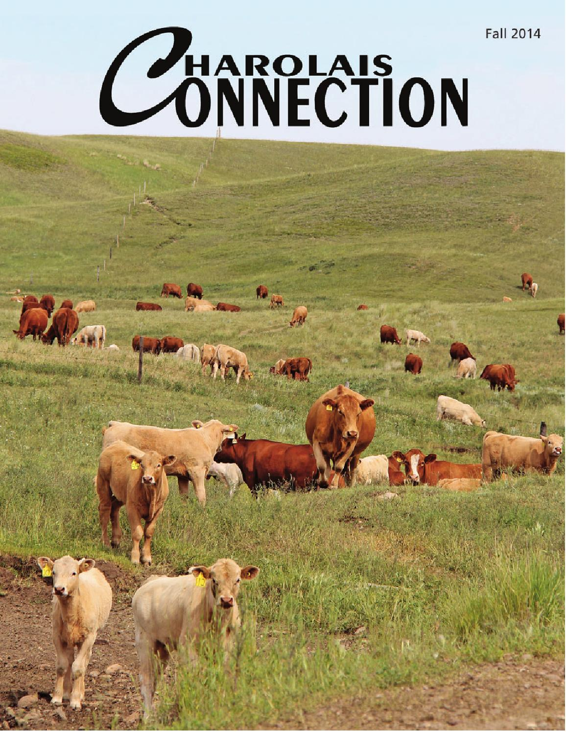 Fall 2014 charolais connection by Charolais Banner - issuu