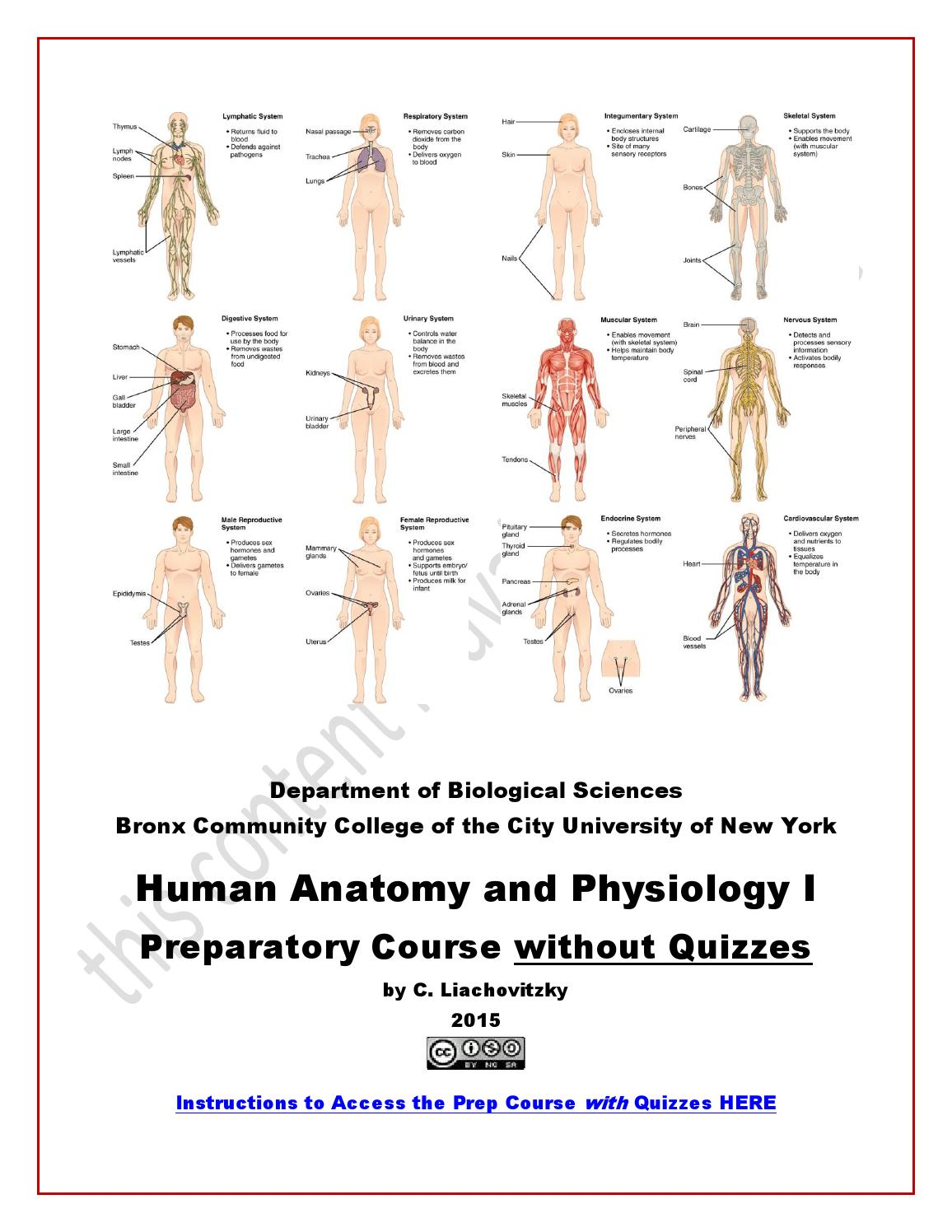 Human anatomy college course