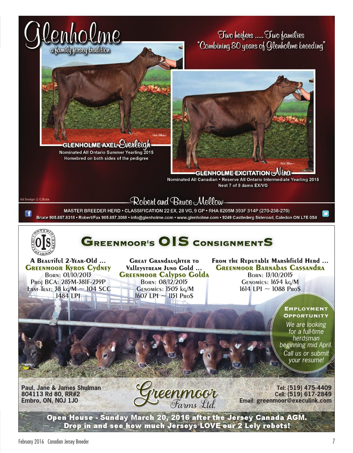 2016 canadian jersey breeder feb by canadian jersey