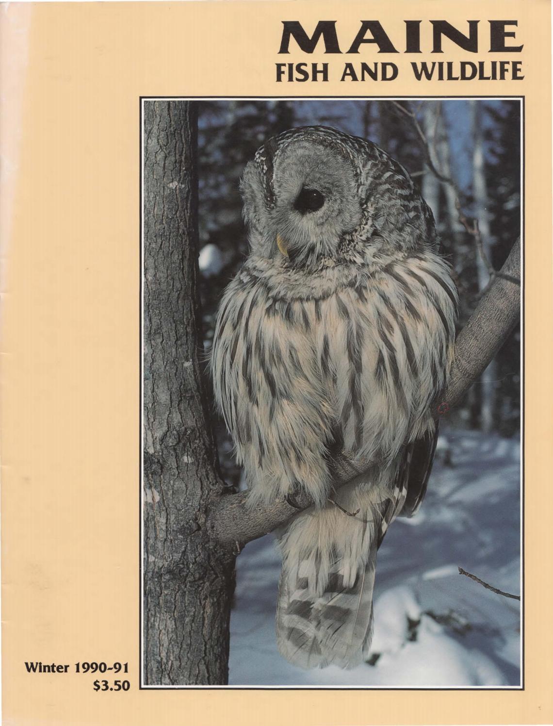 Maine fish and wildlife magazine winter 1990 91 by maine for Maine fish wildlife