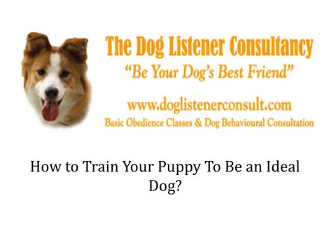 How to Train Your Puppy to be an Ideal Dog?