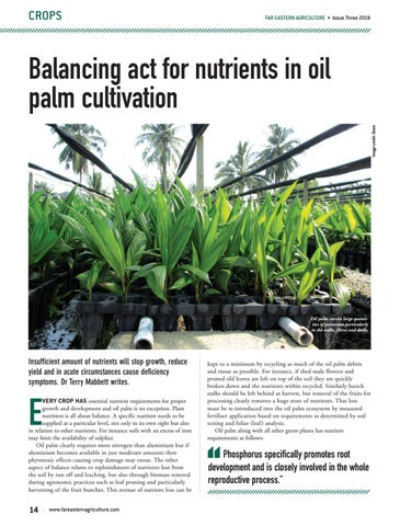 Balancing act for nutrients in oil palm cultivation