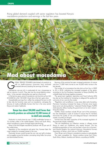 Mad about macadamia